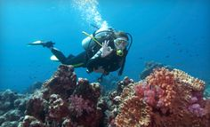 $199 for Open Water SCUBA certification with GirlDiver in West Seattle.