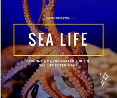 SEA LIFE Gewinnspiel