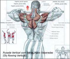 Blog sobre fisiculturismo, com dicas de suplementação e exercícios para o ganho de massa muscular magra ou redução de peso.