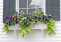 windowbox_ideas_flowers_foliage.jpg (540×380)