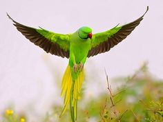 Ilovebirds.