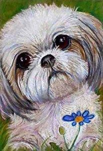 Custom Pet Portrait 5 x or Gift Certificate by Mary Detwiler in the FASO Daily Art Show Perro Shih Tzu, Shih Tzu Puppy, Pictures To Paint, Dog Pictures, Cute Dog Drawing, Paint Your Pet, Beginner Painting, Animal Paintings, Animal Drawings