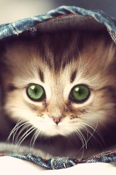 Tiny little guy with beautiful green eyes!
