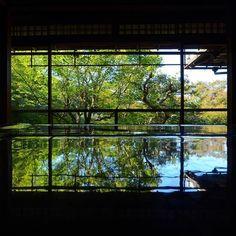 【kuu.7】さんのInstagramをピンしています。 《行きたかった瑠璃光院!紅葉狙いがまだまだ青かった!でもそれでもきれかった!期間限定公開是非行くべき! #自然#木 #苔#緑 #natural#green #photo#photograph #瑠璃光院 #カメラ#camera #一眼#一眼レフ #nikon#d7000 #空#森#kyoto  #写真#写真好き #大好き#love #京都#京都写真部  #癒し#気持ちい 素敵なカメラ好きの方の影響受けて行っちゃいました!!いつも行く場所参考にしてまーっす!》