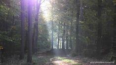 Heilmeditation #08 - VERBUNDENHEIT IM SELBST ~ [sanfte Musik, Meditatio...