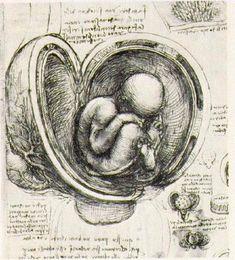 dessin leonard de vinci womb 55 56 dessins de Leonard De Vinci  histoire design art