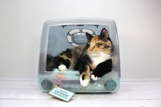 Iconic Vintage iMacs Upcycled Into Cat Beds - DesignTAXI.com