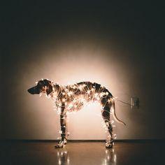 Любимая собака фотографа Theron Humphrey