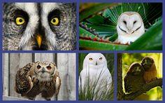 Did someone say Owls?
