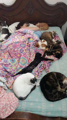 #cats #love #follow #photooftheday #catpics