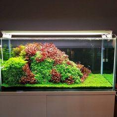 10 Tips on Designing a Freshwater Nature Aquarium Planted Aquarium, Aquarium Aquascape, Nano Aquarium, Nature Aquarium, Aquarium Landscape, Aquascaping, Aquarium Design, Nano Cube, Reptile Terrarium