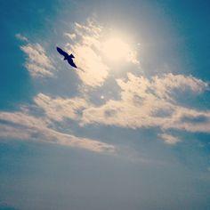 tonbi flying in blne sky @Shicihrigahama