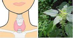Эти растения помогут восстановить правильную и сбалансированную работу щитовидки!