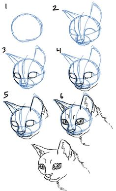 How to Draw Cat Faces/Heads- 3/4 View