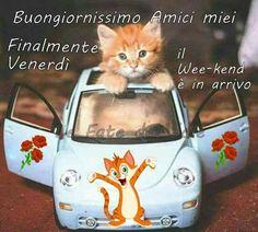 buongiorno venerdì gatto