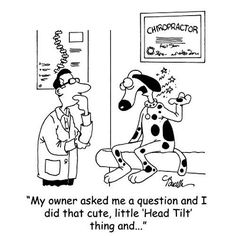 1000 Images About Chiropractic Humor On Pinterest