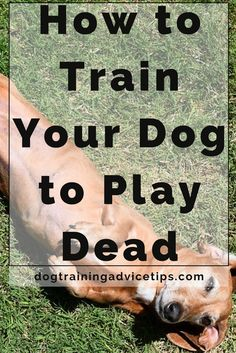 Do you want to learn a dog training trick to impress your family or friends? Then find out how to teach your dog to play dead!