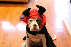 Pin for Later: Your Comprehensive Guide to Dog and Cat Halloween Costumes Devil