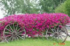 pink flowers in a wagon | Flickr - Photo Sharing!