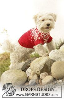 "Knitted DROPS dog coat in ""Karisma"" with traditional Norwegian pattern. ~ DROPS Design"
