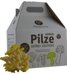 Pilz-Kit