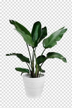 Arecaceae Plant Leaf Palm branch, Potted green plants, green leafed plant and white plant pot transparent background PNG clipart Bamboo Plants, Potted Plants, Ikea Plants, Balcony Plants, Bonsai Plants, Air Plants, Planting Succulents, Cactus Plants, Indoor Plants