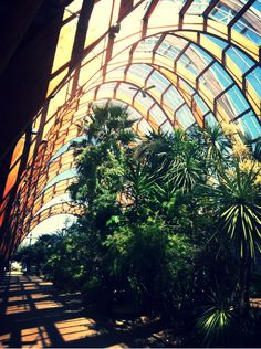 This is one of my favourite places in the world! Winter gardens Sheffield Yorkshire