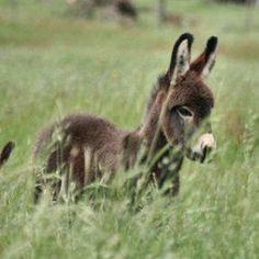 I love donkeys.