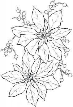 .Poinsettias