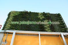 Muro verde sistema Ignacio Solano atico Murcia http://www.paisajismourbano.com/wp-content/uploads/2013/02/jardin-vertical-murcia-trabajo-finalizado-fachada-vegetal-recien-plantada.jpg