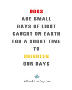 Dogs are small rays of light caught on earth for a short time to brighten our days.