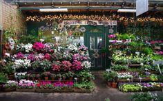 Flower and Birds' Market of Ile de la Cité