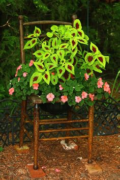chair planter that wonderful green coleus and those beautiful Container Flowers, Container Plants, Container Gardening, Garden Chairs, Garden Planters, Chair Planter, Plantation, Shade Garden, Purple Garden
