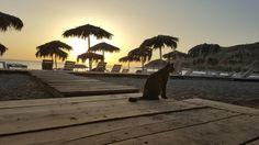 Lesbos - Petra # Cat -  by Esbee