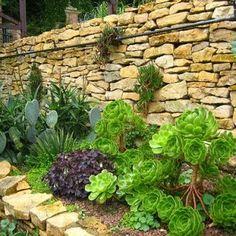 Mediteranean Garden pictures