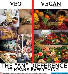 if you are #vegetarian, please think about going #vegan to stop animal abuse