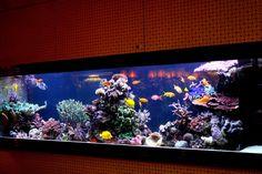 Best tanks from around the world. Saltwater Aquarium Fish, Saltwater Tank, Reef Aquarium, Salt Water Fish, Salt And Water, Reptile Cage, Reptile Enclosure, Marine Aquarium, Cool Tanks