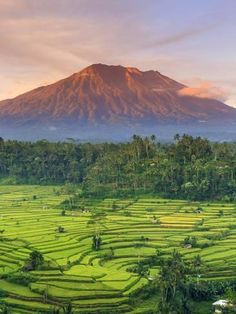 Photographic Print: Indonesia, Bali, Redang, View of Rice Terraces and Gunung Agung Volcano by Michele Falzone : Bali Lombok, Bali Travel Guide, Asia Travel, Places To Travel, Places To See, Places Around The World, Around The Worlds, Voyage Bali, Rice Terraces