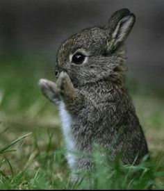 I wish the bunnies in my yard would stand up and clap like this :)