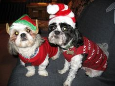 Pups in ugly Christmas sweaters!
