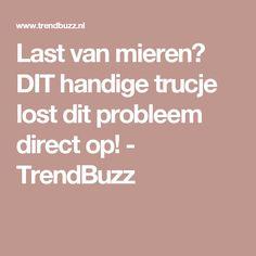 Last van mieren? DIT handige trucje lost dit probleem direct op! - TrendBuzz