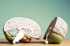 Do You Really Use Only 10 Percent of Your Brain?