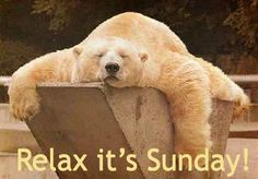 Relax it's Sunday quotes quote days of the week sunday polar bear sunday quotes happy sunday happy sunday quotes Sunday Humor, Sunday Quotes, Funny Sunday, Weekend Quotes, Morning Quotes, Tierischer Humor, Sunday Pictures, Night Pictures, Bear Pictures