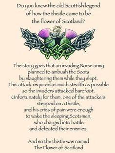 The legend of the thistle. Scottish sayings. Scotch, Tartan, Plaid, Scotland History, Scottish Highlands, Scottish Gaelic, Scottish Sayings, Scottish Bagpipes, Scottish Clans
