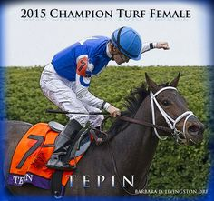 Barbara Livingston @DRFLivingston  14h14 hours ago Congratulations to the connections of 2015 female turf champion TEPIN!