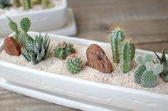 """""""Desenhar e implantar um jardim de suculentas é incrível, mas eu realmente amo os vasinhos pequeninos ou atéminúsculosque criam ver..."""
