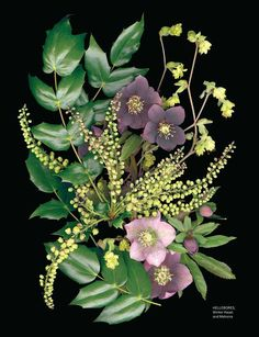 HELLEBORES, Winter Hazel, and Mahonia by artist Ellen Hoverkamp from Sweet Paul - Spring 2015 - Page 116-117