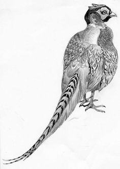 MES DESSINS ANIMALIERS - Le blog de Alex.bowhunter Bird Illustration, Pheasant, Blog, Art, Pictures, Drawings, Dachshund Dog, Animal Paintings, Hunting