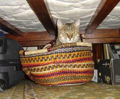Mohó az ágy alatt.