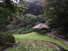 Santuario Meiji en Tokio, Japon